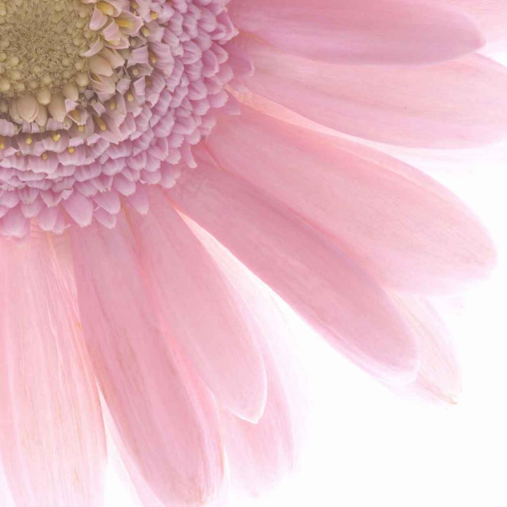 【風水で恋愛運アップ】恋愛成就を引き寄せる恋の風水3つ