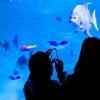 彼とふたりで行きたいリゾート水族館ベスト5★大人な夏デートに!