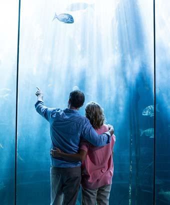 水族館デートのカップル