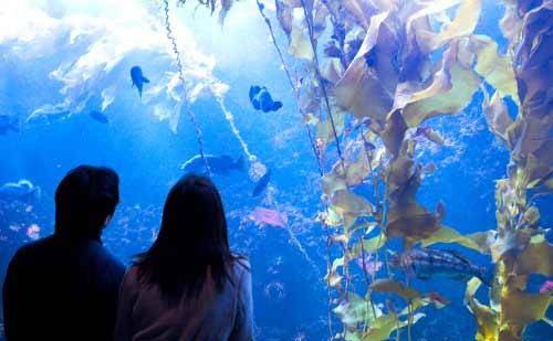 水族館でデートをするカップル