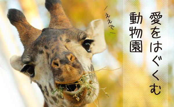 動物園デートでさりげなく可愛さアピる5つの方法