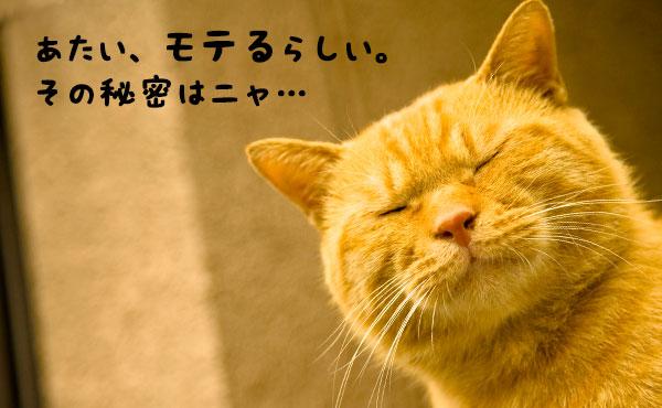 猫っぽい性格の気ままな猫系女子が男にモテる理由5つ
