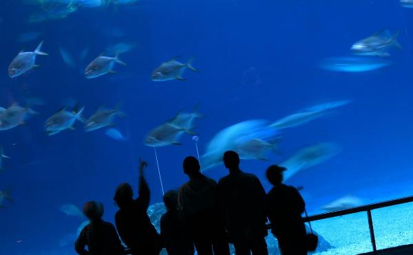 水族館デートの服装の選び方5つのポイント