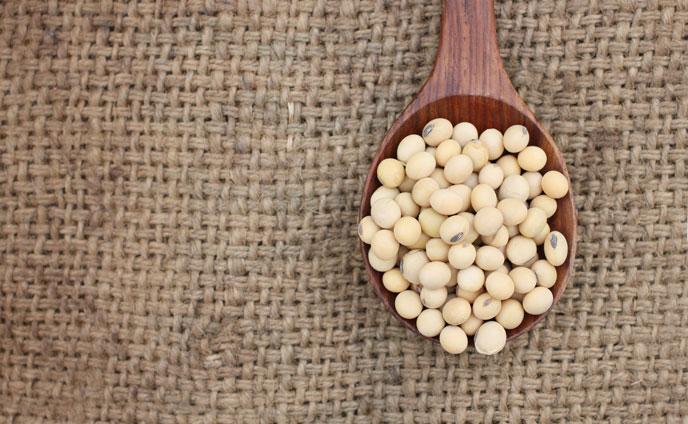 大豆イソフラボンが豊富な投入のもと・大豆