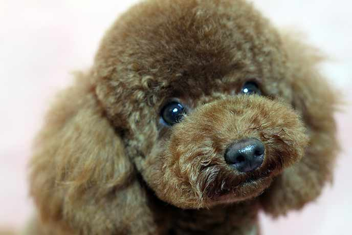 子犬のようなつぶらな瞳