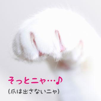 爪が出てる猫の手