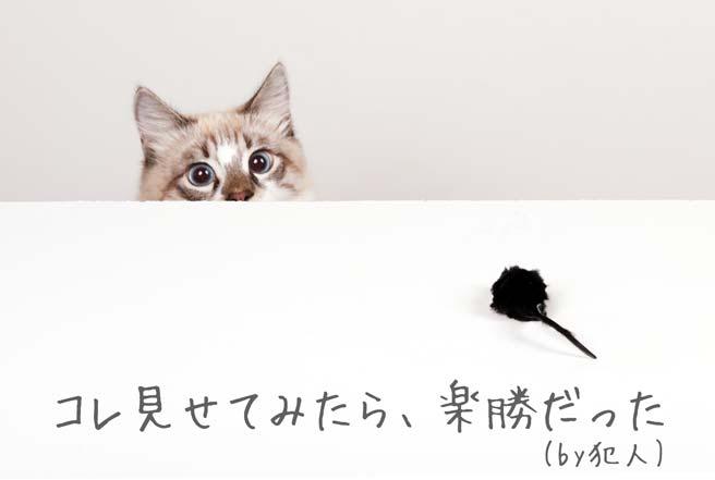 意外とすんなりさらわれる猫