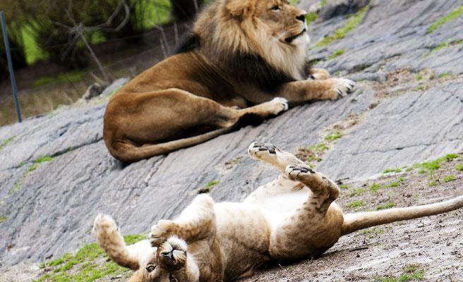 動物園デート