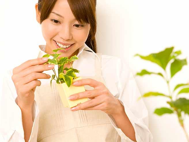 植物を育てる素敵な女性