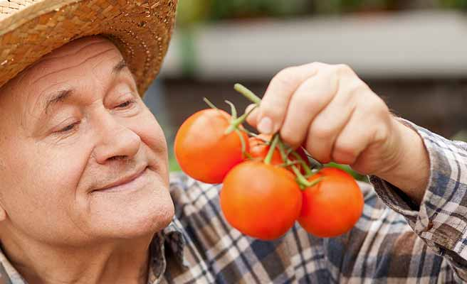 とれたてのトマトを持つおじさん