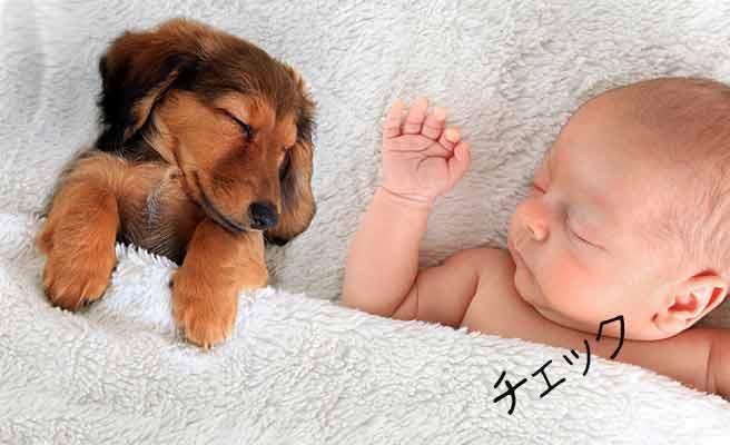 赤ちゃんと犬が並んで寝ている