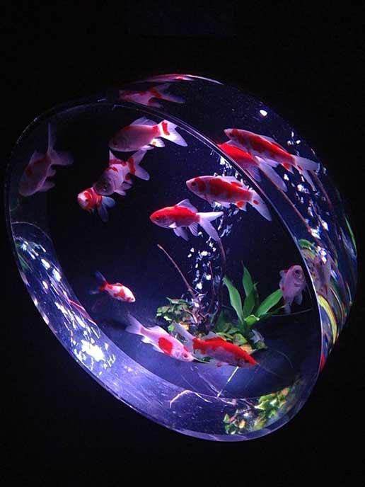 金魚が入った丸い水槽