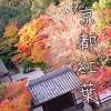 京都紅葉狩りデートスポット10・見ごろ/隠れ名所/恋愛成就