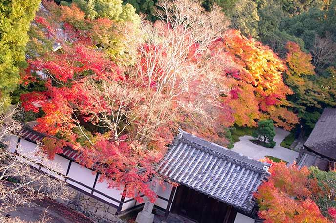 建物を覆うように咲き誇る壮大な紅葉