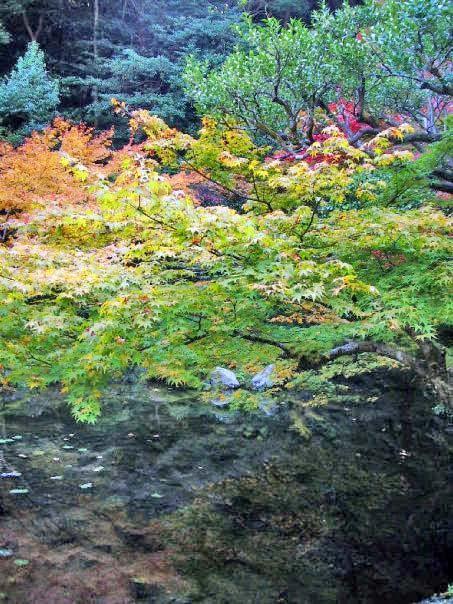 水面に映る紅葉が美しい