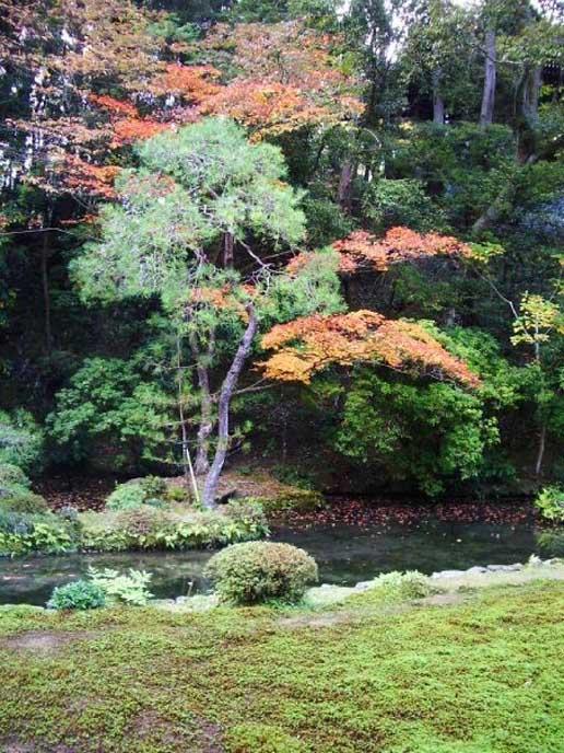 日本式の中庭と紅葉が一緒に見れる