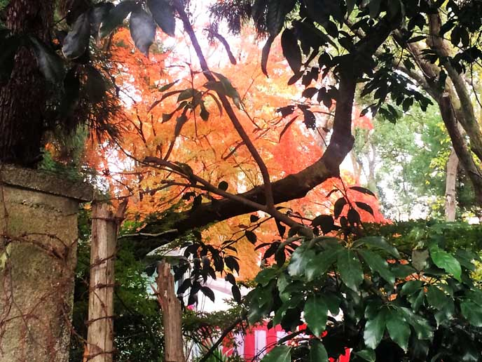 緑の葉と紅葉のコントラストも素敵です