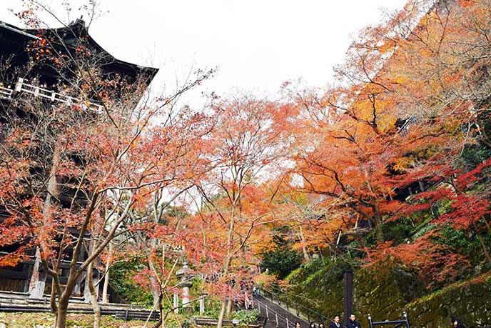 12月上旬でもまだ紅葉を楽しむことができます