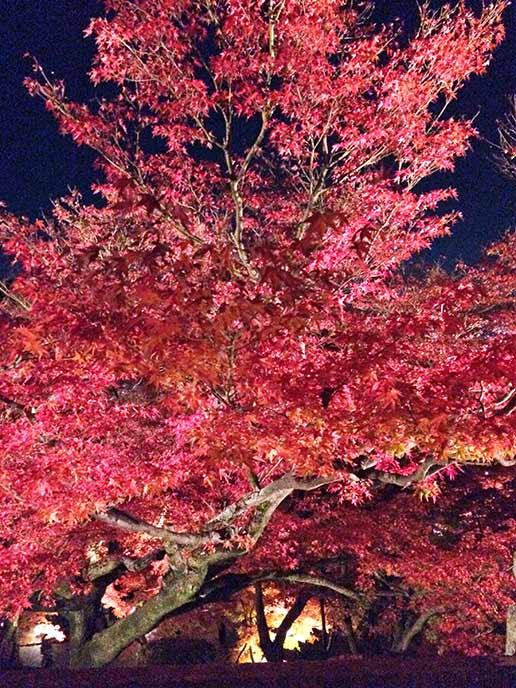 夜空に浮かぶ赤い紅葉