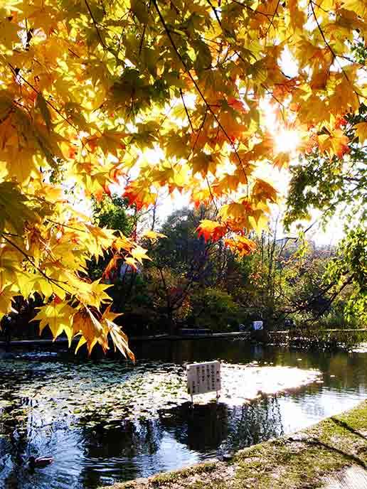 キャンパス内にある池と色づき始めた紅葉が素敵