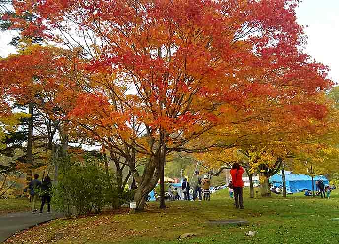 散策道でも美しい紅葉の景色を見ることができます。