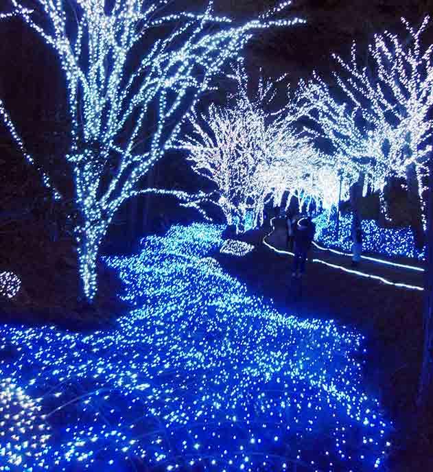 京丹波町冬ほたる