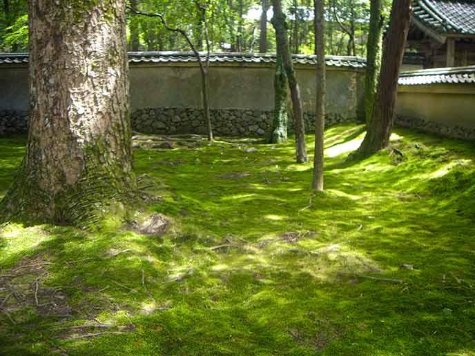 緑の苔が一面に広がりその美しさに見とれてしまう♥