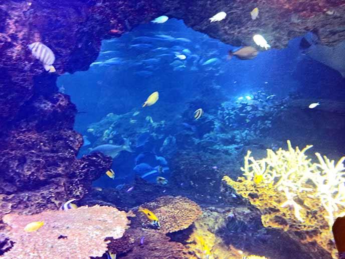 美しい色の魚たちが泳ぐ水槽はとても幻想的♥
