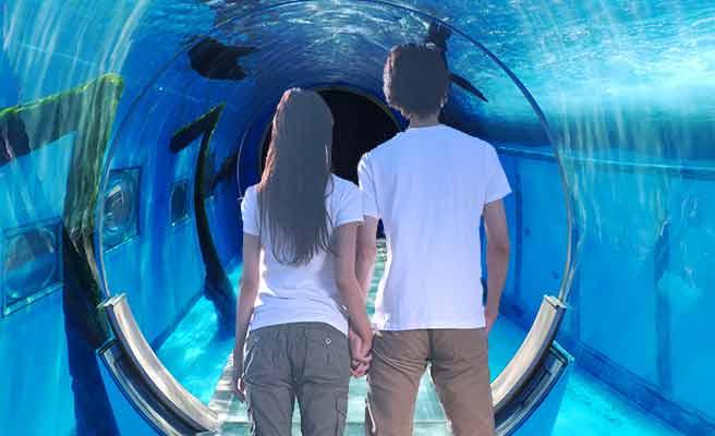 水族館の水中回廊を歩くカップル