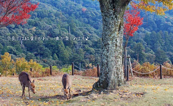 奈良の紅葉穴場スポット11選・のんびり紅葉狩りデート
