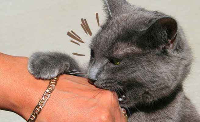 拳を甘噛みする猫