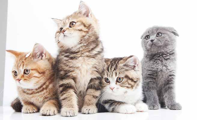 子猫が集まって同じ方向を見ている