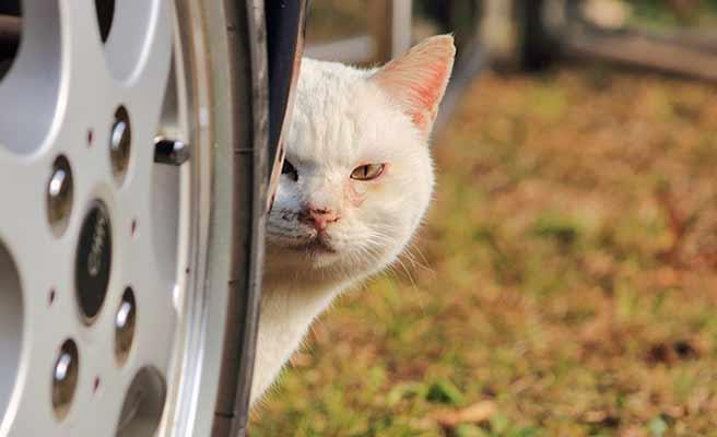 物陰から覗く野良猫