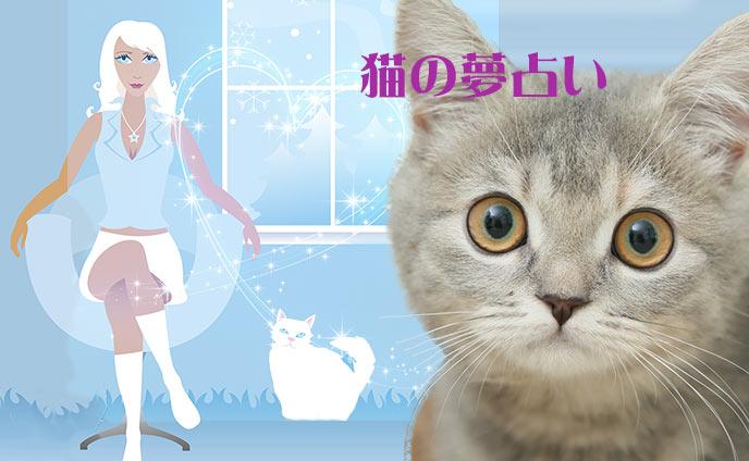 夢占い猫の夢を見た意味や暗示は吉夢か凶夢か今すぐ診断☆