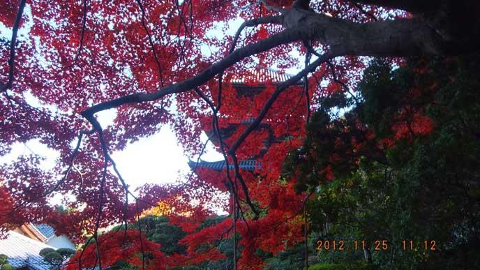 赤い葉の向こう側に見える三重塔。紅葉と合わせた景色が美しい。