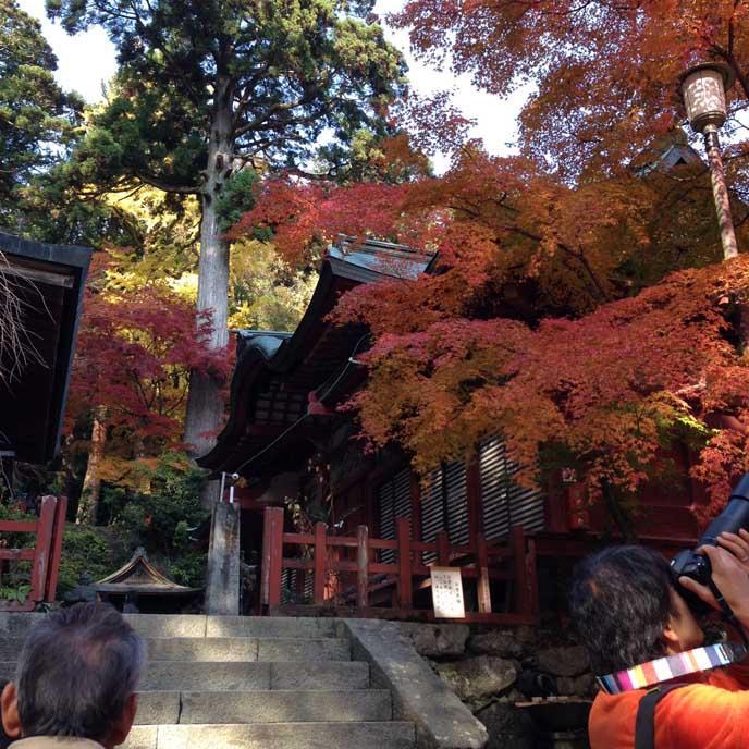 赤く染まる木々の向こうに佇む本堂。神秘的な雰囲気があります。