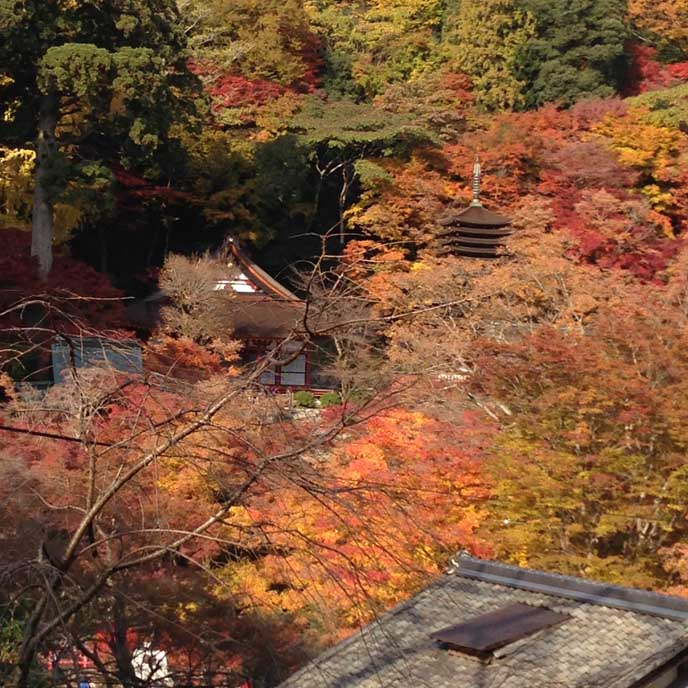 高台から望む景色も素晴らしい!秋色の木々は心を落ち着かせてくれます。