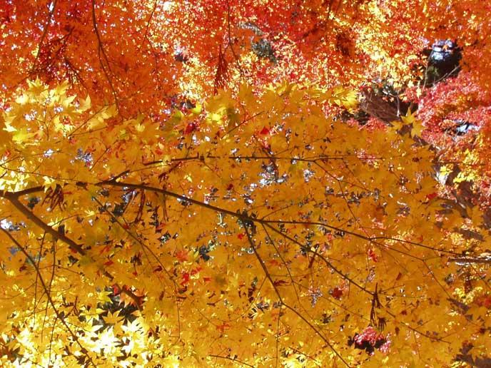 黄色・赤・橙に染まる木の葉が折り重なり秋をたっぷりと感じられます。