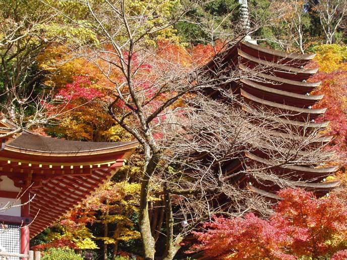 十三重塔と本殿に色づいた木々が重なる厳かな美しい景色を堪能できます。