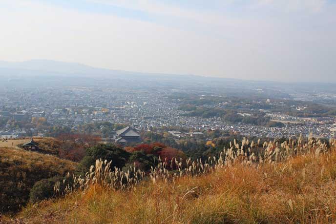 色づく木々とススキの穂越しに見る奈良の街。秋の景色です。
