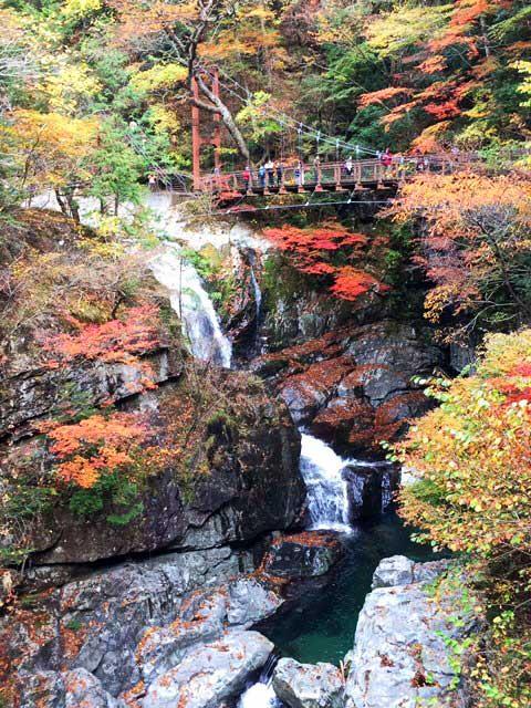 岩間から流れ出す滝とそれを囲むように茂る木々の紅葉が素晴らしい景色!