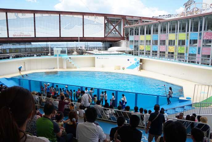 広々としたイルカショーのプール。観客席は屋根があるので安心。