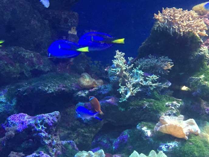 カラフルでとっても綺麗な魚たちを見てると、時間が経つのも忘れてしまいそう♪