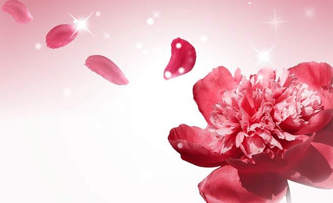赤い花びらが散る