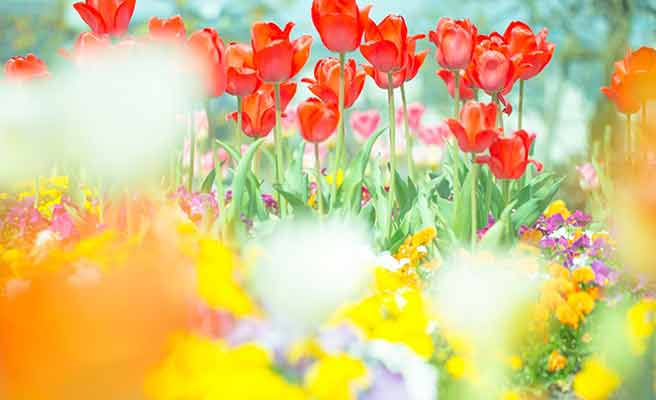 色々な種類の花が咲いている