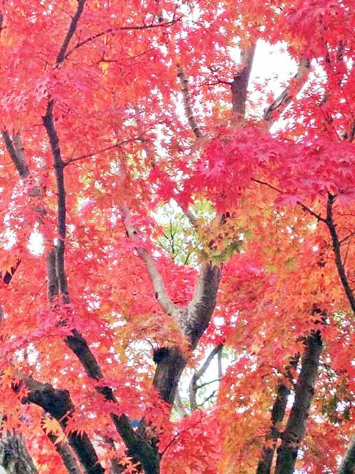 エントランスから眺める紅葉は綺麗です。