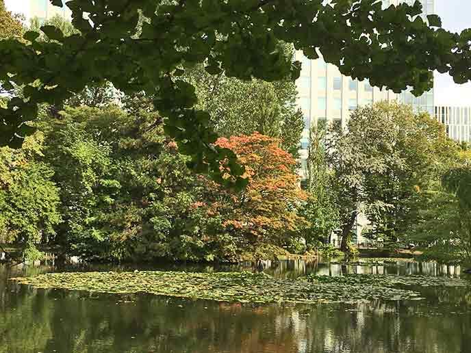 池の周りの木々が季節ごとに色を変えて、四季を感じられます☆