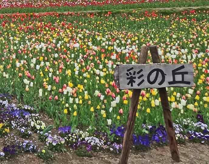 たくさんのチューリップが咲き誇る光景はとっても美しくて感動的です☆