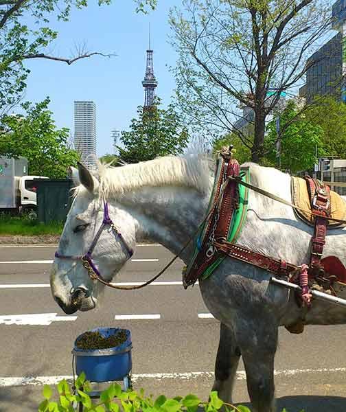 公園内に馬車を発見!馬車に乗れるなんてとっても貴重♪