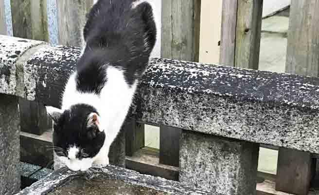 境内で水を飲む猫